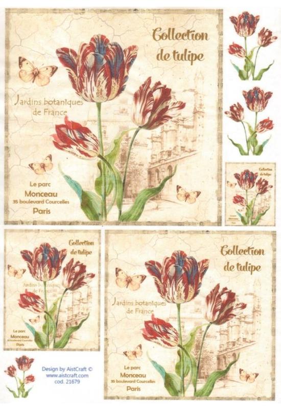 Rizspapír-Tulipán