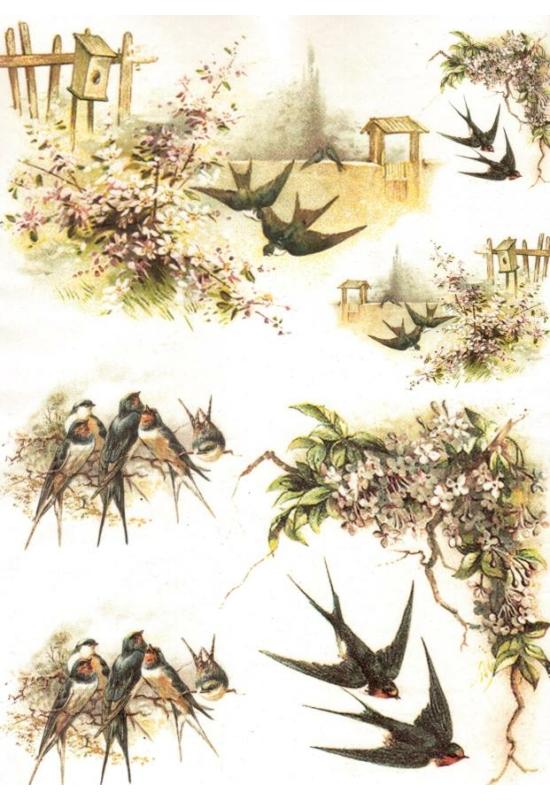 Rizspapír-fecskék
