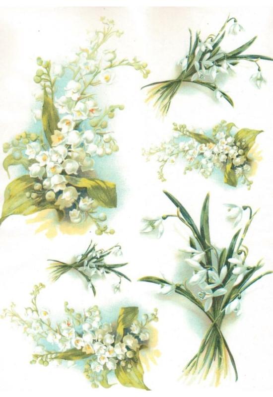 Rizspapír-Gyöngyvirág