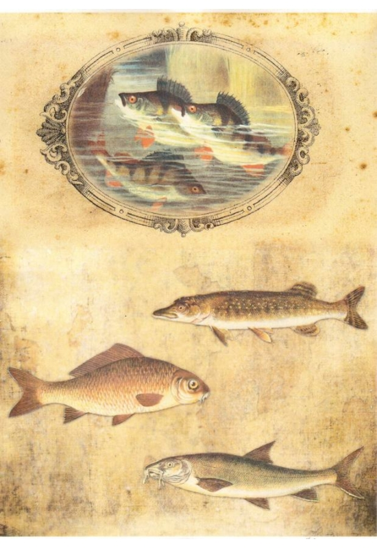 Rizspapír- halak