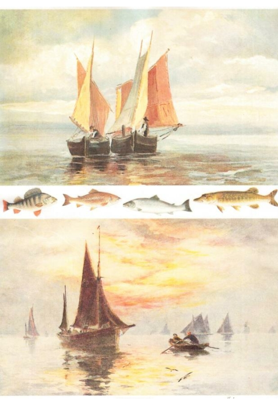 Rizspapír-hajó, halak