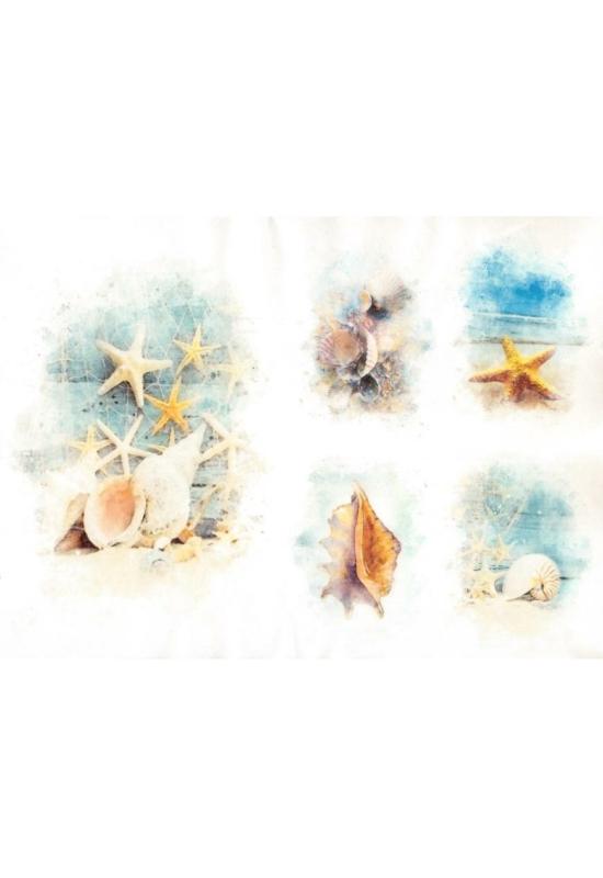 Rizspapír-tengeri csillag, csigák